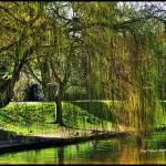 """""""Willow Tree"""" by frenchy"""