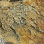 """""""Texture Study-Stone (0940)"""" by NikkiSoppelsa"""