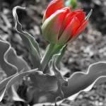 """""""Flower"""" by joaszym"""