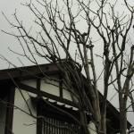 """Tree House"" by BrendanArthurRing"