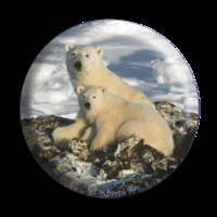 POLAR BEAR SPHERE