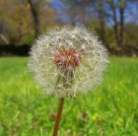 So delicate and preety. Make a wish!