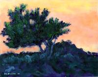 Torrey Pine at Daybreak by RD Riccoboni
