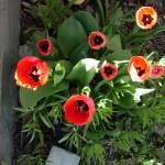 """""""The Sings of Spring"""" by MoisesVega"""