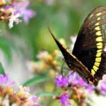 """Butterfly with Nikkor 50mm only"" by resouzaesouza"