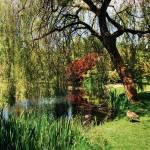 """""""Van Dusen Garden - Vancouver"""" by resouzaesouza"""