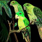 """Greenparakeets1byharry"" by harryljjr"