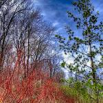 """Early Spring In The Cawthra Woods"" by GJCPhotography"