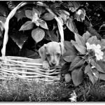 """""""Puppy For Sale"""" by annatheodora"""