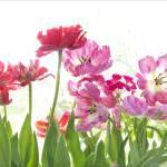 """Tulip Garden"" by judystalus"