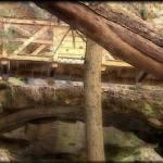 """""""Under the Bridge"""" by PicklesAddie"""
