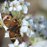 """""""Sweet Nectar"""" by PhotosbyTeia"""