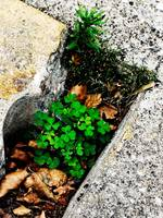 Green on Concrete