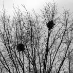 """Empty Nests"" by Sterlic"