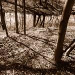 """SHADOWS & TREES"" by LisaMurgo"