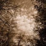 """""""TREES & CLOUDS"""" by LisaMurgo"""