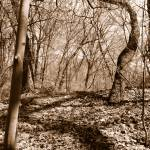 """""""TREES & TWISTED SHADOWS"""" by LisaMurgo"""