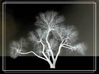 Tree Solarized