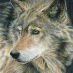 """Wolf ""Curious Eyes"""" by CarlaKurtArt"