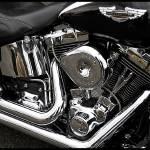 """Harley"" by JimSutherland"