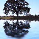 """""""Oak Tree"""" by sherryk"""