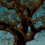 """""""Curly Tree 2"""" by GG-SMITH"""