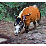 """""""The Red River Hog"""" by markkumurto"""