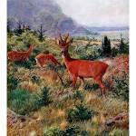 """""""The European Roe Deer (Capreolus capreolus)"""" by markkumurto"""
