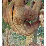 """""""The three-toed sloth"""" by markkumurto"""