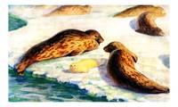 The ringed seal (Pusa hispida)