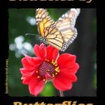 """Distracted by Butterflies 04167"" by quotes"