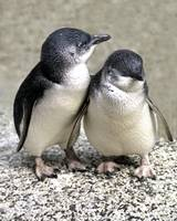 Penguin Buddies