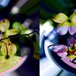 """""""Floating place settings for beautifully colored Bl"""" by DBGCreations"""