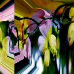 """""""Regal and Surrealistic Dogwood Blossoms"""" by DBGCreations"""