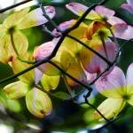 """""""Spherical Blossoms"""" by DBGCreations"""