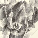 """Monochrome Tulip #2"" by makingamark"
