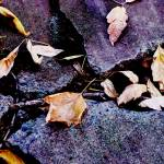 """Leaves & Stones"" by DebsDesigns"