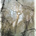 """""""Bidwell Park Trees PS"""" by DebsDesigns"""
