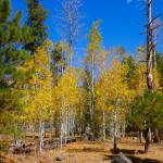 """Fall Colors - 7057"" by BartElder"
