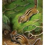 """Cute Siberian Chipmunks"" by markkumurto"