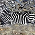 """zebra"" by KristinaH"