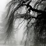 """Fog & Willow"" by eberg_man"