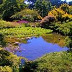 """""""Arboretum"""" by kauschen"""