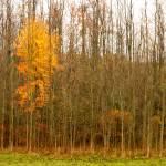 """Late Autumn"" by dbwalton"