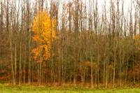 Late Autumn