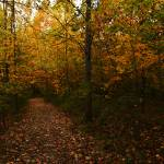 """The Sacred Grove in the Fall"" by dbwalton"