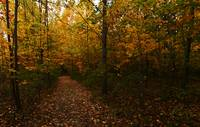 The Sacred Grove in the Fall