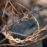 """Twisted vines"" by photoclave"