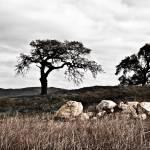 """""""Oaks & Rocks"""" by dbwalton"""