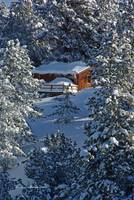 Cabin in trees on Casper Mountain